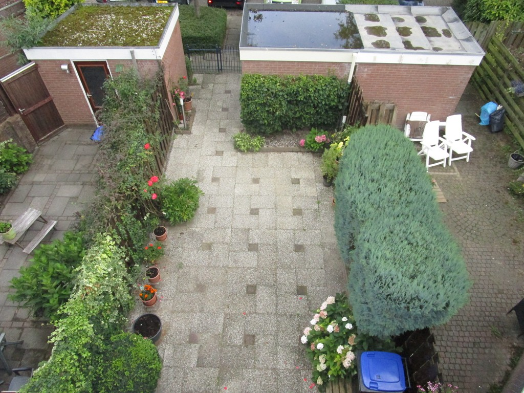 Bosfazant, Nieuwegein