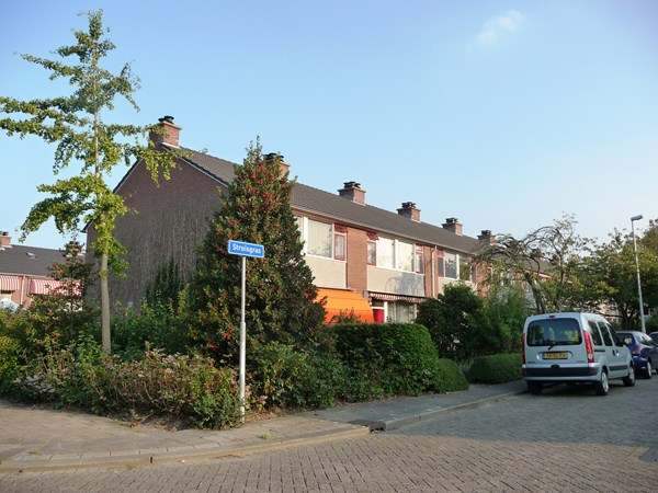 Rotterdam Struisgras  17  3484996