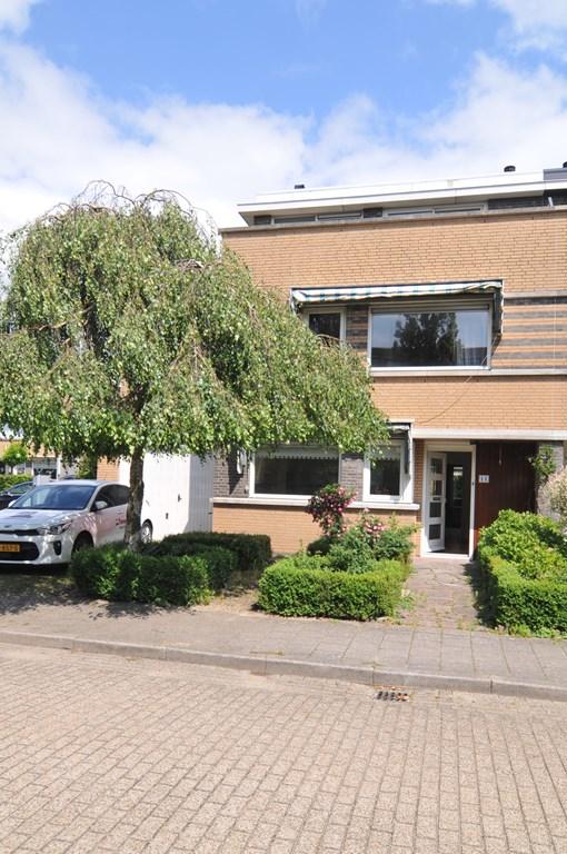 Korenbloem, Noordwijkerhout