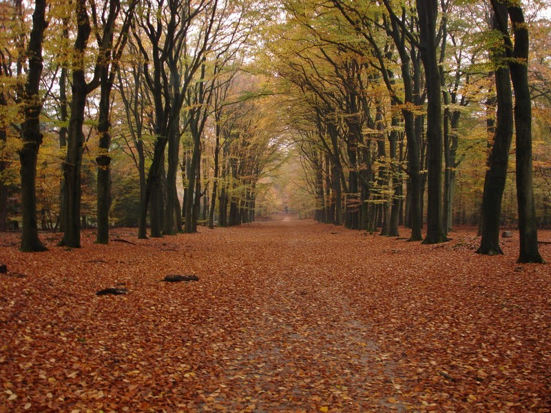 Lage Bergweg, Beekbergen