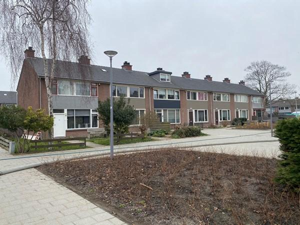Rotterdam Raaigras  89  3833221