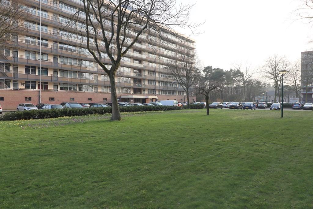 Goudvinklaan, Bilthoven