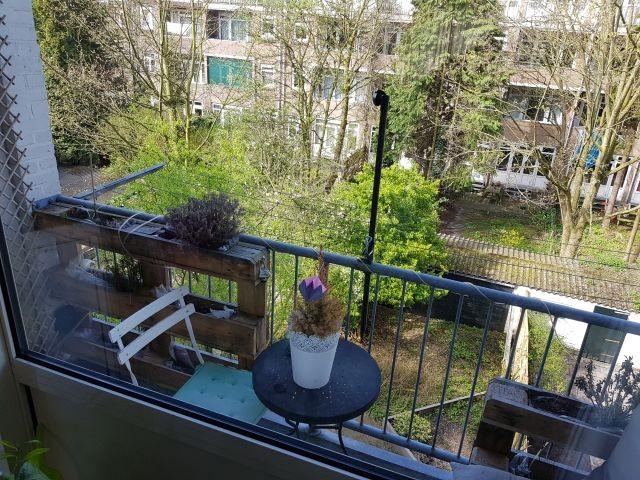 Insulindestraat, Rotterdam