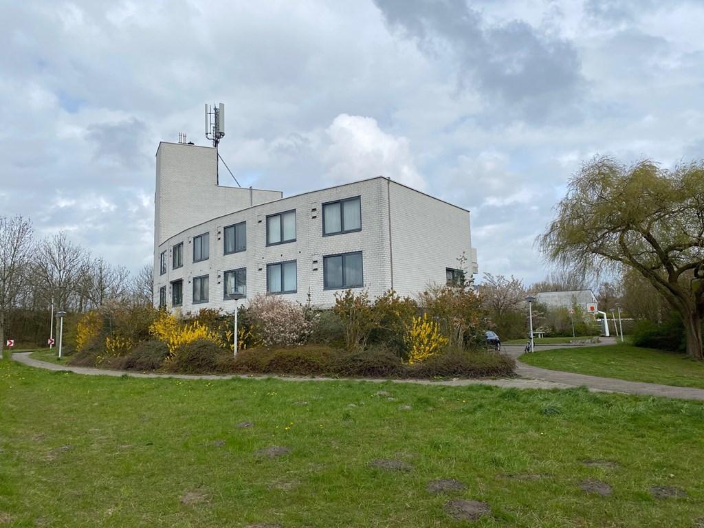 Veenbes, Leiden